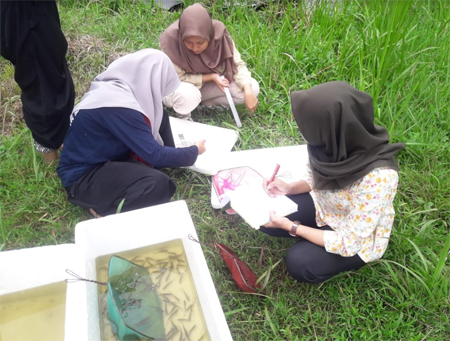 IPB University Student Conducts Initial Research of Nilem Fish Growth